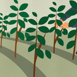 Illustration de l'entretien des plants