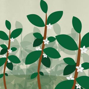 Illustration de la croissance des plants