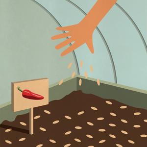 Illustration du semis de graines