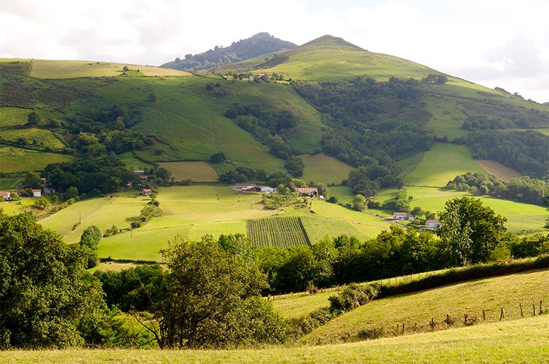 Paysage du Pays Basque avec un champs de Piments